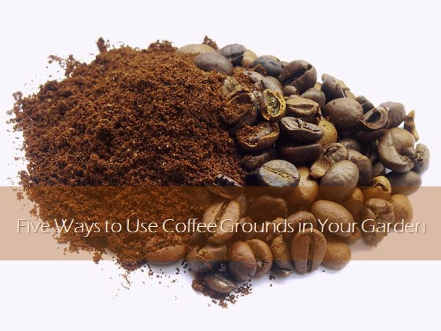 Five ways to use coffee grounds in your garden landscape edging blog for How to use coffee grounds in garden